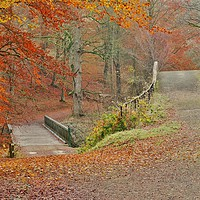 Buy canvas prints of Autumn Woodland     by Victor Burnside