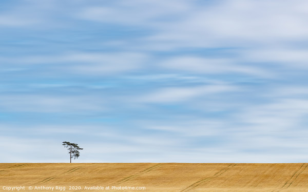 Lonely Tree  Canvas Print by Anthony Rigg