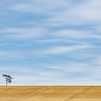 Buy canvas prints of Lonely Tree  by Anthony Rigg