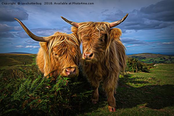 Highland Cows Canvas print by rawshutterbug