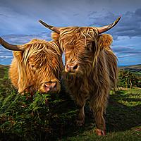 Buy canvas prints of Highland Cows by rawshutterbug