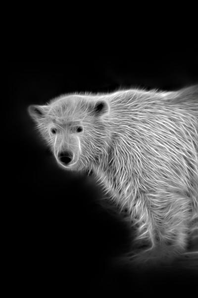 Polar Bear Cub Canvas print by rawshutterbug