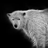 Buy canvas prints of Polar Bear Cub by rawshutterbug