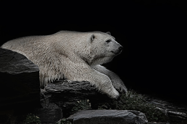Polar Bear On The Rock Canvas print by rawshutterbug