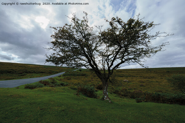 Single Tree On Dartmoor Canvas Print by rawshutterbug
