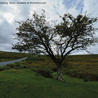 Buy canvas prints of Single Tree On Dartmoor by rawshutterbug