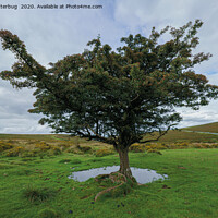 Buy canvas prints of Single Tree At Dartmoor National Park by rawshutterbug