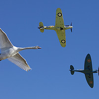 Buy canvas prints of Formation flying by Jim O'Donnell