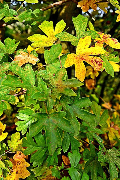 Autumn leaves Canvas Print by Natalie Felton
