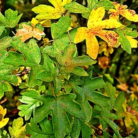 Buy canvas prints of Autumn leaves by Natalie Felton
