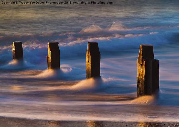 Groynes At Sunrise Canvas print by Tracey Yeo. Devon Photography