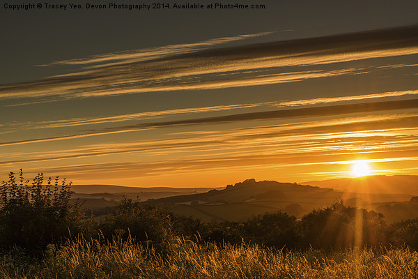 Golden Rays Canvas print by Tracey Yeo. Devon Photography