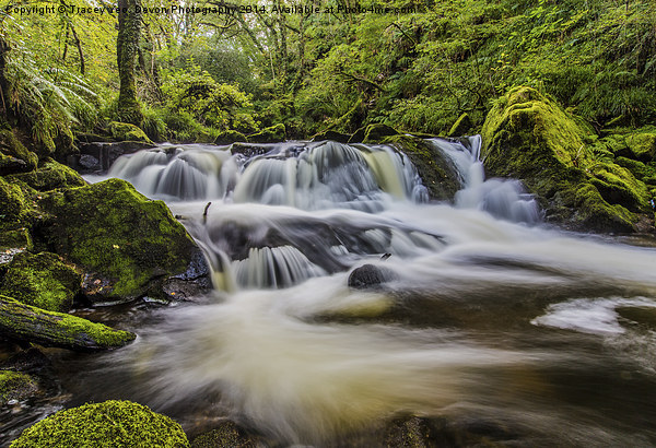 Golitha Falls Canvas print by Tracey Yeo. Devon Photography