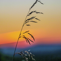 Buy canvas prints of Standing Tall At Sunset by Tracey Yeo. Devon Photography