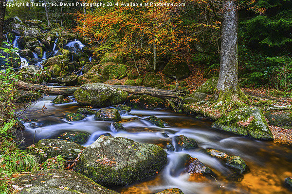 Autumn At The Falls  Canvas print by Tracey Yeo. Devon Photography