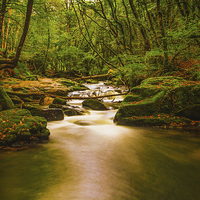 Buy canvas prints of Golitha Falls.  by Tracey Yeo. Devon Photography