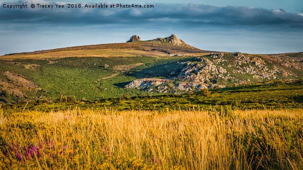 Haytor Rocks With Painted Effect. Canvas Print by Tracey Yeo