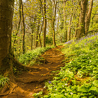Buy canvas prints of Bluebell Wood by Tracey Yeo