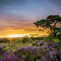 Buy canvas prints of New Forest Sunset at Bratley View by Kevin Browne