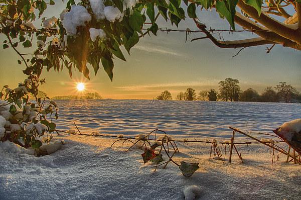 Sunrise through the Branches Canvas Print by Alex Clark