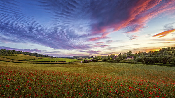 Sunset on Poppy Field in Kent Canvas print by John Ly