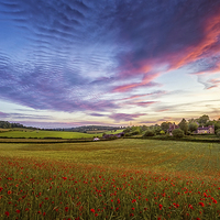 Buy canvas prints of  Sunset on Poppy Field in Kent by John Ly