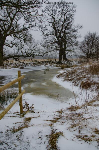 Frozen Brook Acrylic by Robert Maddocks