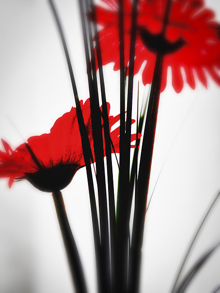 Red Flower 1 Canvas print by John Pinkstone
