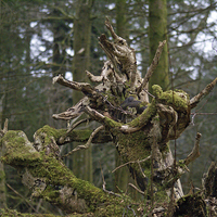 Buy canvas prints of Upturned Tree Root by James Taylor