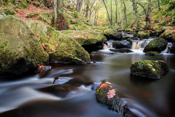 Padley Gorge Canvas print by Jason Moss