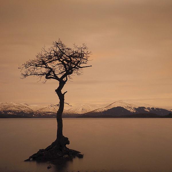 Millarochy Bay, Loch Lomond at winter. Canvas print by Tommy Dickson