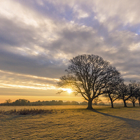 Buy canvas prints of Capabilitys Oaks by Roz Greening