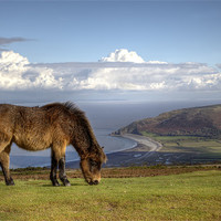 Buy canvas prints of Exmoor Pony and Bossington Beach by Mike Gorton