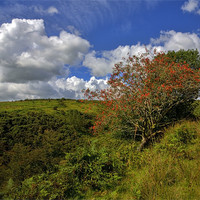 Buy canvas prints of Exmoor At Its Best by Mike Gorton