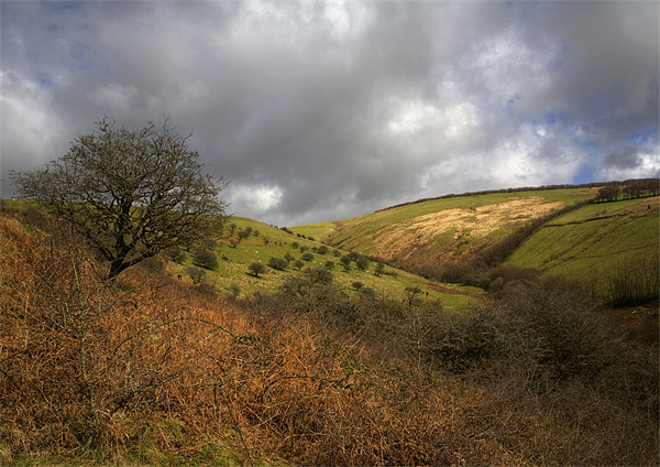 Exmoor Valley Print by Mike Gorton