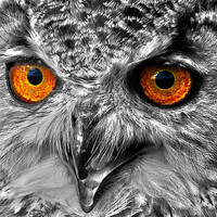 Buy canvas prints of Eyes of a Bird of Prey by Mike Gorton