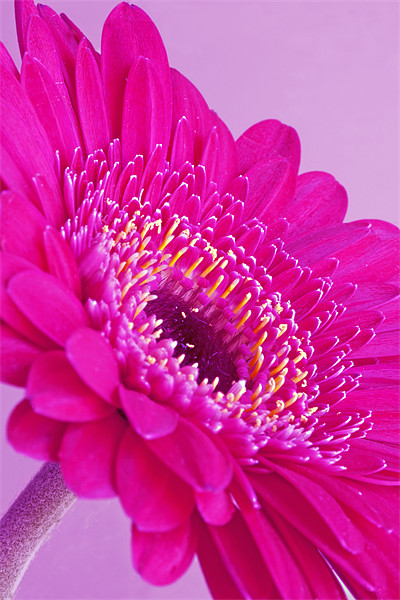 Pink Flower Canvas print by Mike Gorton