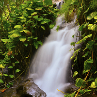 Buy canvas prints of Flowing Silk by Pete White