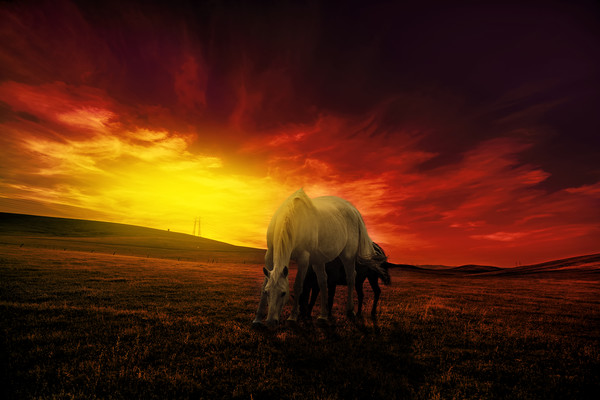 young couple of horses grazing in the hills at dus Canvas Print by Guido Parmiggiani