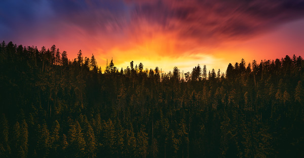 sunset over the forest  Canvas print by Guido Parmiggiani