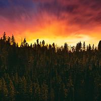Buy canvas prints of sunset over the forest  by Guido Parmiggiani