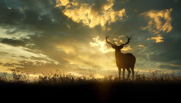 deer at sunset Canvas print by Guido Parmiggiani