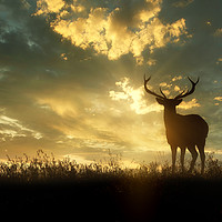 Buy canvas prints of deer at sunset by Guido Parmiggiani