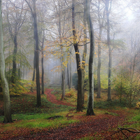 Buy canvas prints of Autumn Morning Woods by Ceri Jones