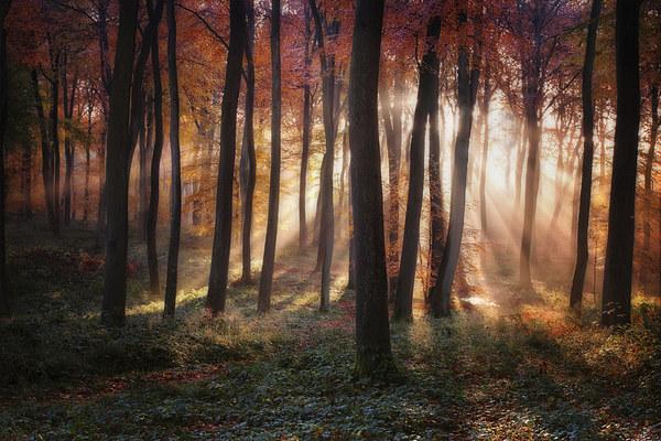 Autumn Morning Woodland Light Canvas print by Ceri Jones