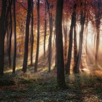 Buy canvas prints of Autumn Morning Woodland Light by Ceri Jones