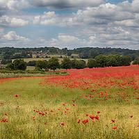 Buy canvas prints of Summer Poppies by Ceri Jones