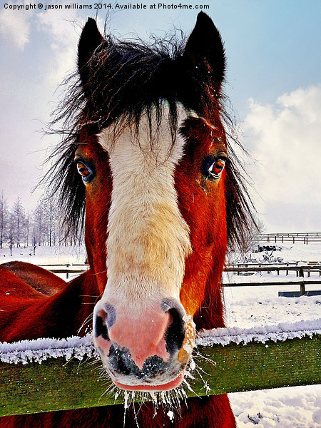 Snowy Whiskers. Canvas Print by jason williams