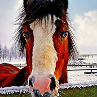 Buy canvas prints of  Snowy Whiskers. by jason williams