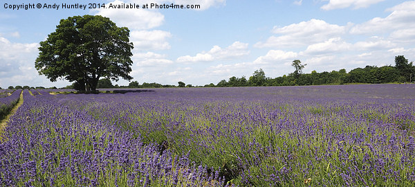 Lavender Field Canvas print by Andy Huntley